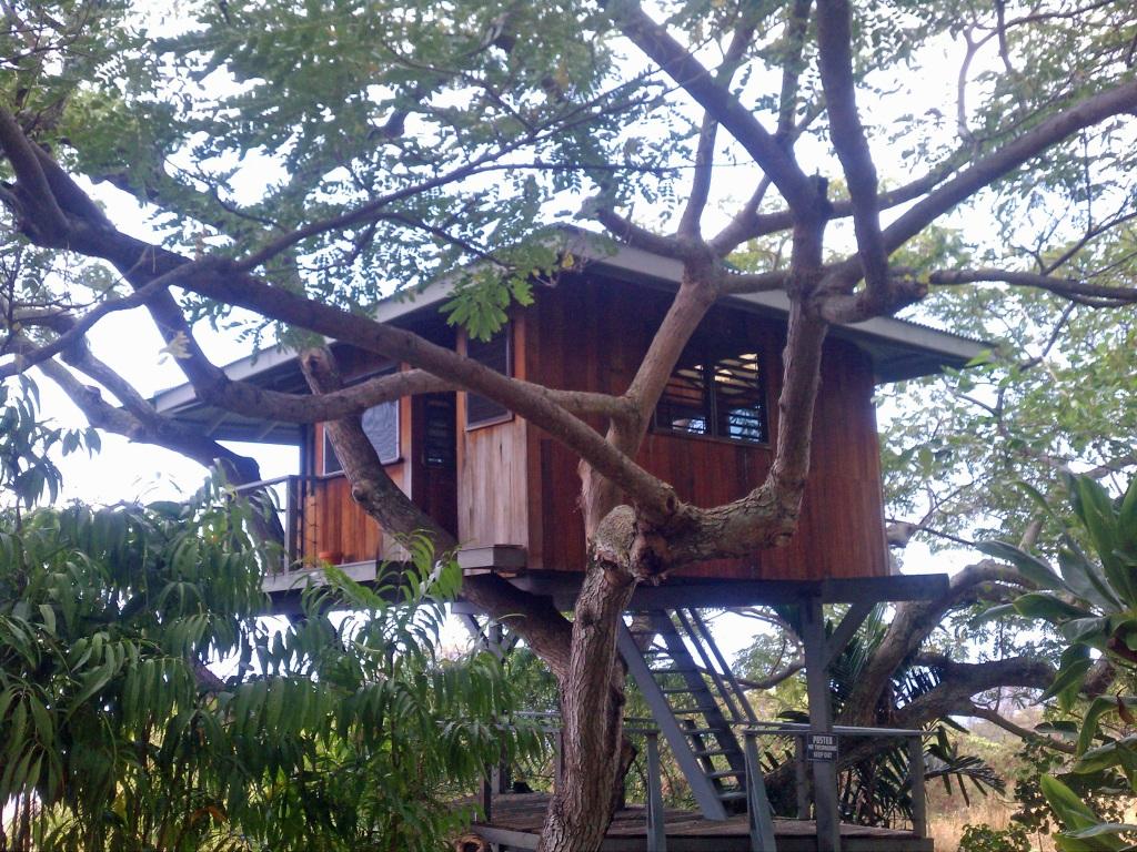 Kona Tree House, Hualalai Tree House, Kona Property Blog, Holualoa Property Expert, Kona Listing Agent, Kona Buyer's Agent,
