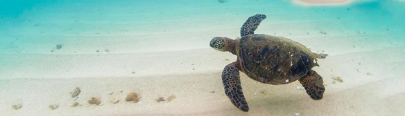 turtles-blog